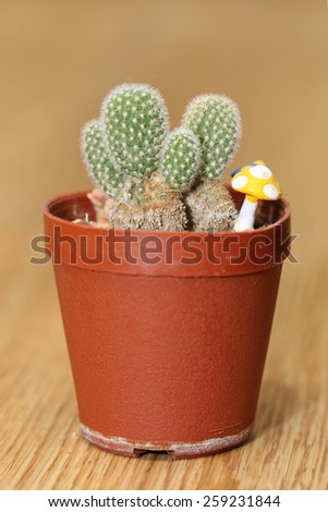 small cactus in a pot - stock photo