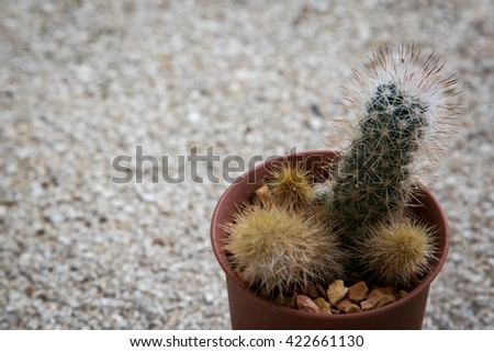 Small cactus on grey  background.