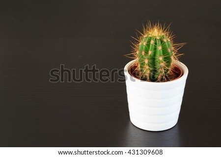 Small cactus plant on dark