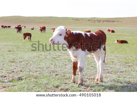 small calf in a field on a background of the flock