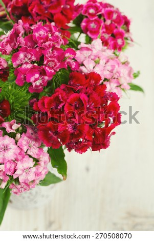 small carnation (dianthus barbatus) flowers on wooden surface - stock photo