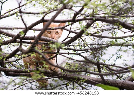Small  cat hiding branches.