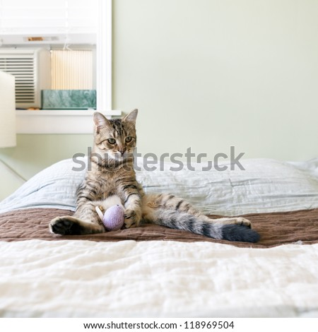 Small Cat in the bed - stock photo