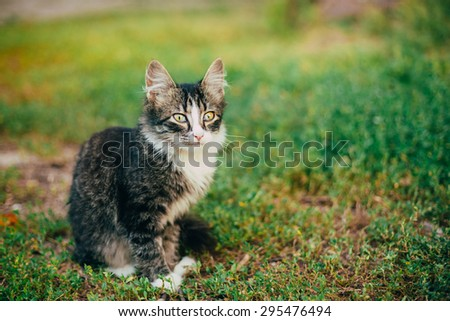Small Cat Kitten Playing On Green Spring Grass. Outdoor Portrait - stock photo