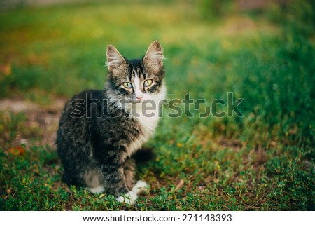 Small Cat Kitten Sitting On Green Spring Grass. Outdoor Portrait
