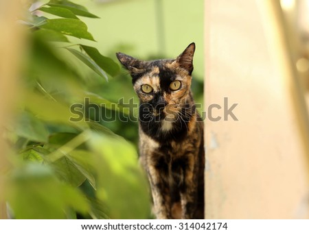 Small cat looking at the camera sitting next to the tree with natural light - stock photo