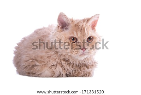 Small cat lying on white background - stock photo