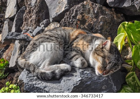 Small cat sleeping on the rocks