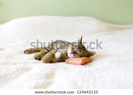 Small Cat with mouse - stock photo