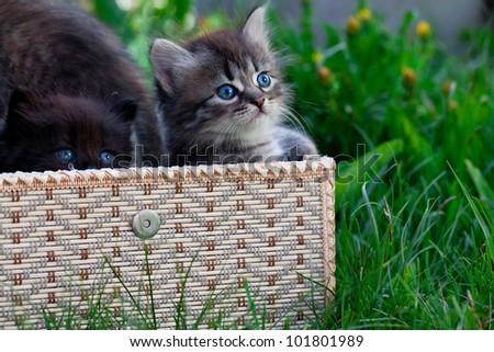 Small cats in a basket on a grass