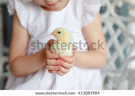 Small chicken close-up, which is holding a little girl in a white dress - stock photo