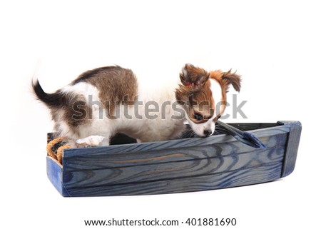 small chihuahua puppy is resting in the ship - stock photo