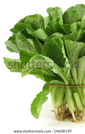 Small Chinese cabbage on white background