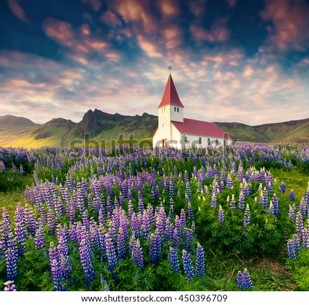 Small church surrounded blooming lupin flowers in the Vik village. Colorful summer sunrise in the Iceland, Europe. Artistic style post processed photo.