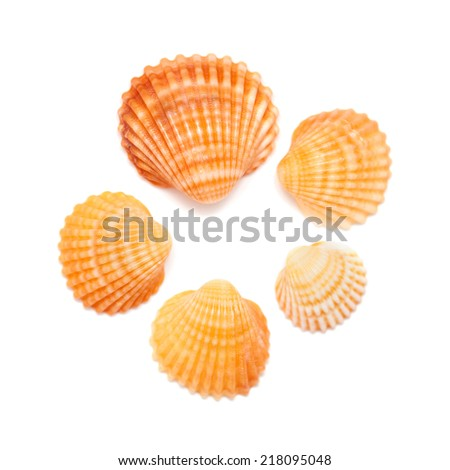 small cockle shells isolated on white background - stock photo