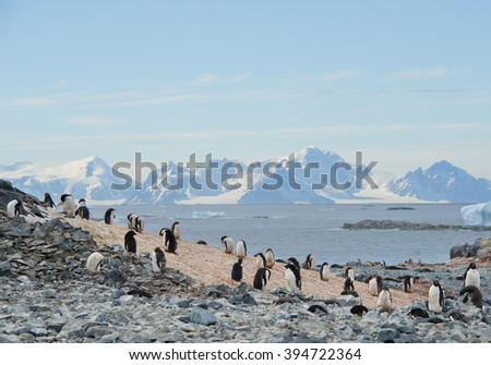 Small colony of Adelie penguins, with mountains in background, Antarctic Peninsula - stock photo
