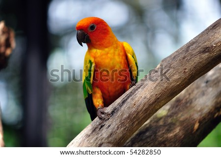 Small colorful parakeet - stock photo