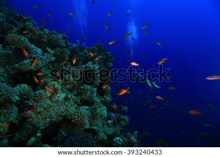 small coral fish underwater