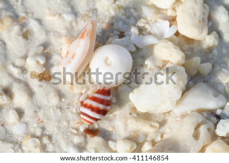 small corals, stones, shells and sticks on the sea coast - stock photo