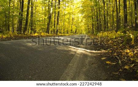 Small Country Road Surrounded by Trees - stock photo