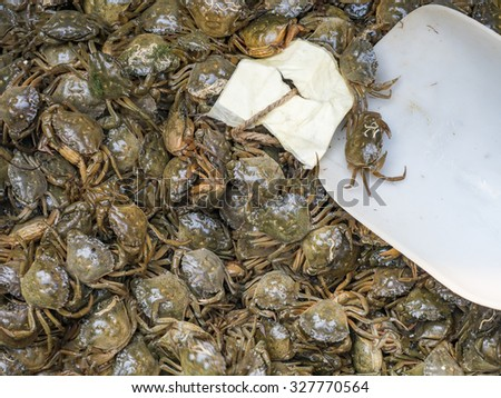 Small crabs for sale at Venice, Italy fish market. - stock photo