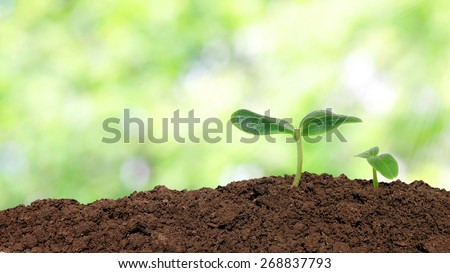 Small cucumber seedling over sunlight background