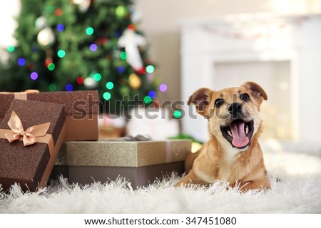 Small cute funny dog with boxes and Christmas tree on light background - stock photo