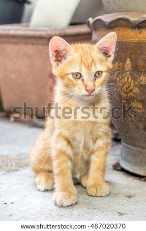 Small cute golden brown kitten sit on outdoor backyard concrete floor under natural light, selective focus on its eye