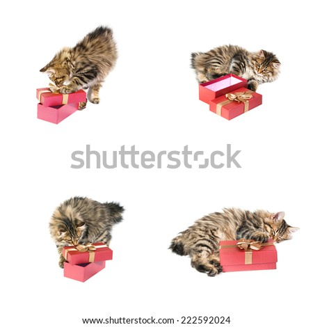 small cute kitten about gift box.set - stock photo