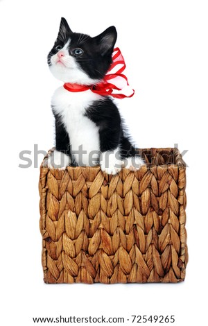 small cute kitten in gift box - stock photo