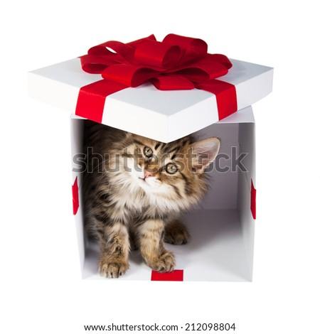 small cute kitten inside gift box - stock photo