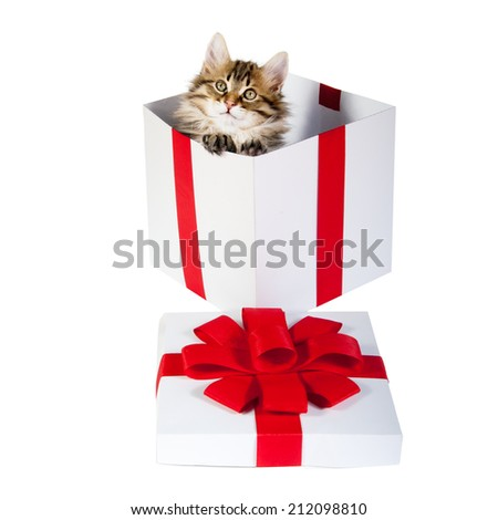 small cute kitten inside gift box - stock photo