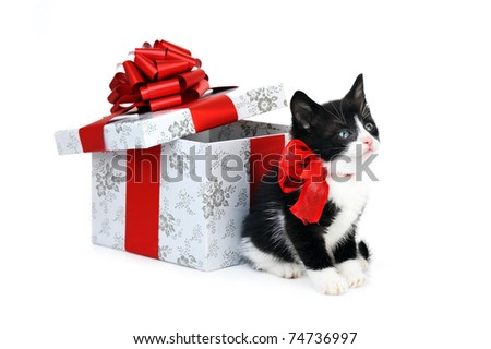 small cute kitten near gift box