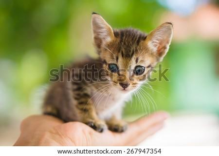 Small cute kitten sit on hand's palm - stock photo