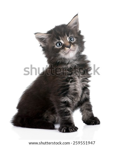 Small cute kitten sitting on a white background, 1 month