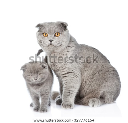 Small cute kitten with his mother cat. isolated on white background