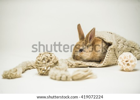 Small cute red haired easter bunny hiding in big knitted hat with decorative balls on homogenous white background - stock photo