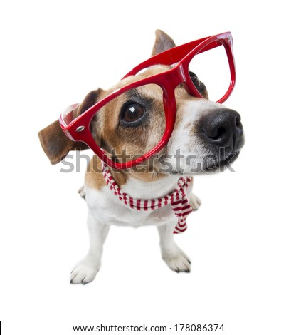 Small cute trendy hipster dog in red glasses without lenses and striped scarf. White background. Studio shot - stock photo