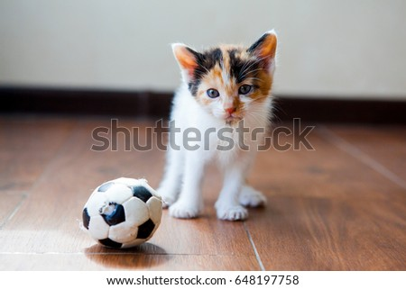 Small cute tricolor kitten playing at football at the flat