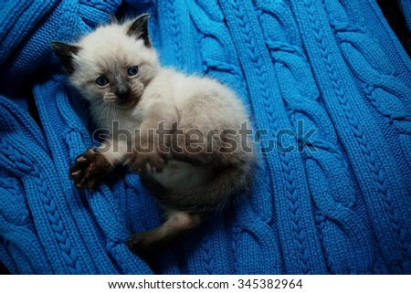 small cute white kitten on a sweater - stock photo