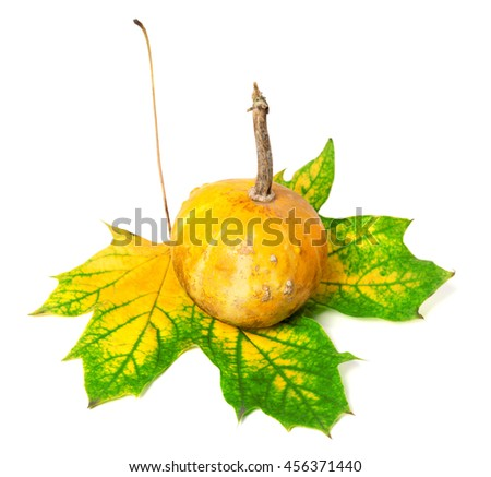 Small decorative pumpkin on autumn multicolor maple-leaf. Isolated on white background - stock photo
