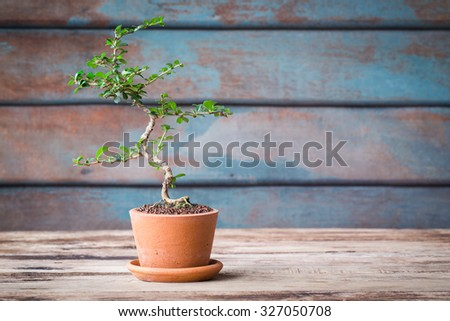 Small decorative tree on wooden floor, Small bonsai tree in the clay pots. vintage picture - stock photo