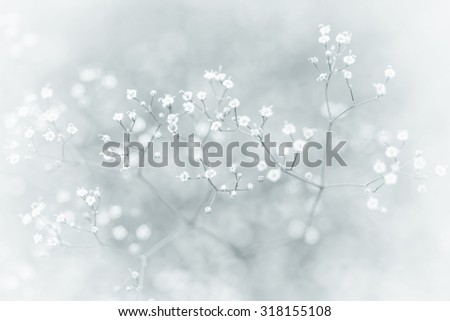 Small Defocused White Flowers (Gypsophila) with Blur Vintage Effect as Natural Background - stock photo