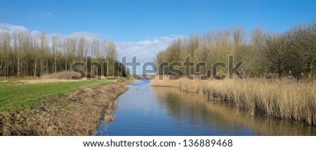 small ditch with reed and trees - stock photo