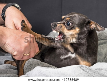 Small dog aggression