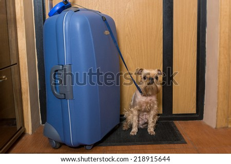 Small dog and a large suitcase at the exit - stock photo