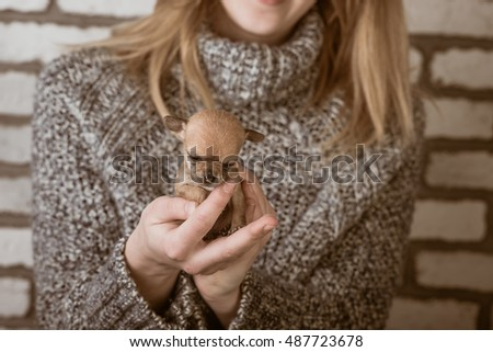 small dog in the hands of a girl