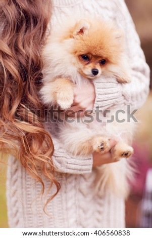 Small dog in the hands of women