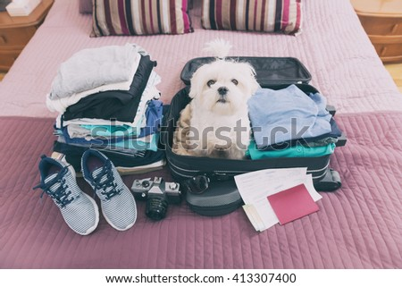 Small dog maltese sitting in the suitcase or bag wearing sunglasses and waiting for a trip - stock photo