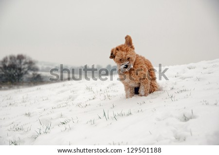 Small dog out in the cold - stock photo